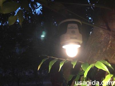木に吊るされたジェントスのランタンSOL-036C